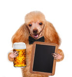 Hond met bier stock foto's