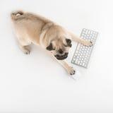 Hond met computertoetsenbord. Royalty-vrije Stock Fotografie