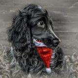 Hond met de hoed van de Kerstman Royalty-vrije Stock Afbeelding