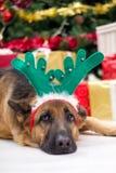 Hond met de hoed van hertengeweitakken op Kerstavond, Kerstboom en g Royalty-vrije Stock Afbeeldingen