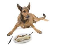 Hond met diner Royalty-vrije Stock Afbeelding