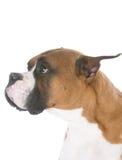 Hond met droevige uitdrukking Stock Foto