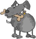 Hond met een Been Stock Fotografie