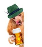 Hond met een bier royalty-vrije stock afbeeldingen