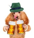 Hond met een bier stock foto