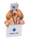 Hond met een eerste hulpuitrusting Royalty-vrije Stock Foto