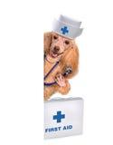 Hond met een eerste hulpuitrusting Stock Foto's