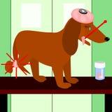 Hond met een gekwetst been Stock Afbeeldingen