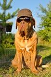 Hond met een hoogtepunt bereikt GLB en zonnebril in de tuin stock afbeeldingen