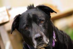 Hond met een koelik Royalty-vrije Stock Foto's