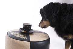 Hond met een kop van koffie Stock Foto