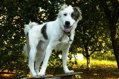 Hond met een kraag Royalty-vrije Stock Foto's