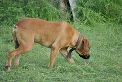 Hond met een kraag stock afbeelding