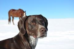 Hond met een paard Royalty-vrije Stock Fotografie