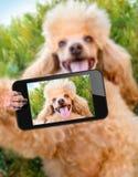 Hond met een smartphone stock afbeelding