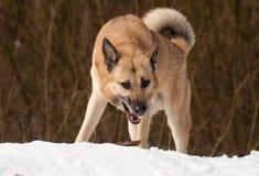 Hond met een stok Royalty-vrije Stock Afbeeldingen