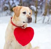 Hond met een stuk speelgoed hart op een kraag stock foto's