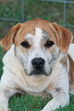 Hond met een Ziel Stock Afbeelding