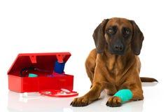 Hond met eerste hulpuitrusting Stock Afbeeldingen