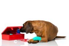 Hond met eerste hulpuitrusting Royalty-vrije Stock Afbeelding