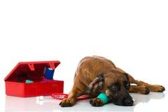 Hond met eerste hulpuitrusting Stock Foto