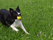 Hond met gele bal Stock Afbeeldingen