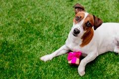 Hond met giftdoos stock afbeelding