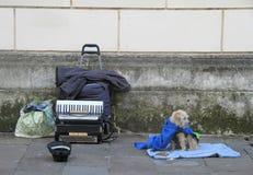 Hond met harmonika openlucht in Vicenza stock afbeeldingen