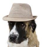 Hond met hoed Royalty-vrije Stock Afbeeldingen