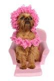 Hond met hoed en sjaal op een bed Royalty-vrije Stock Foto