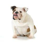 Hond met houding royalty-vrije stock afbeeldingen