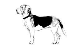Hond met inkt op witte achtergrond wordt getrokken die Stock Afbeeldingen