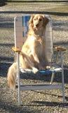 Hond met karakter Royalty-vrije Stock Foto