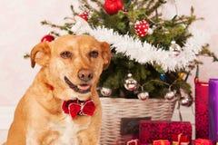 Hond met Kerstboom stock afbeelding