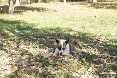 Hond met kleine bal in gras stock fotografie