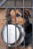Hond met kom Royalty-vrije Stock Foto