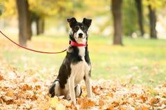 Hond met Kraag royalty-vrije stock fotografie