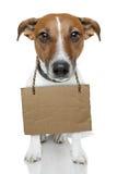 Hond met leeg karton Stock Foto