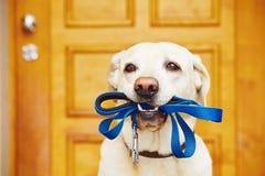 Hond met leiband stock afbeelding