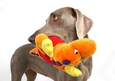 Hond met moppet 2 Stock Fotografie