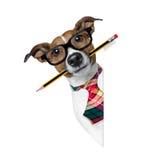 Hond met potlood op het kantoor stock foto's