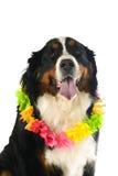 Hond met rode zakdoek Stock Fotografie