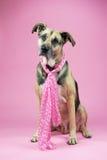 Hond met roze Royalty-vrije Stock Afbeeldingen