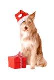 Hond met santahoed en geïsoleerde gift Stock Afbeelding