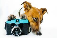 Hond met schaduwen en een fotocamera stock foto's