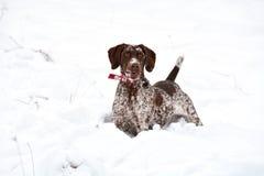 Hond met sneeuwvlokken op gezicht Stock Foto