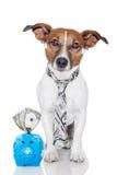 Hond met spaarvarken stock afbeelding