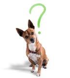 Hond met spottende uitdrukking stock foto's