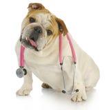 Hond met stethoscoop Stock Afbeeldingen