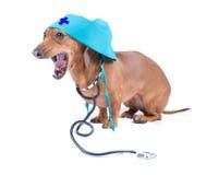 Hond met stethoscoop Royalty-vrije Stock Foto's